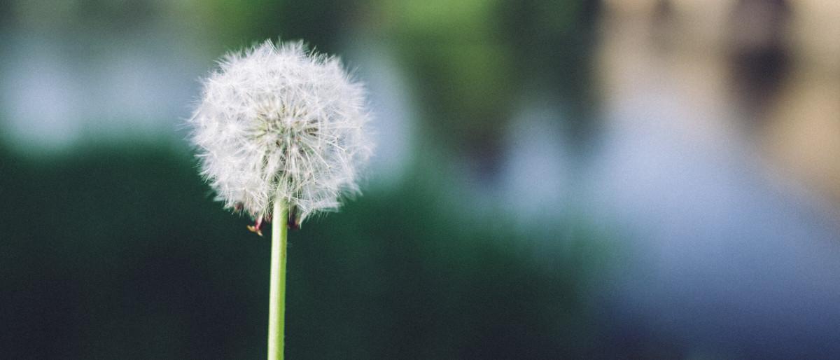 Permalink zu:Spirituelle Heilung